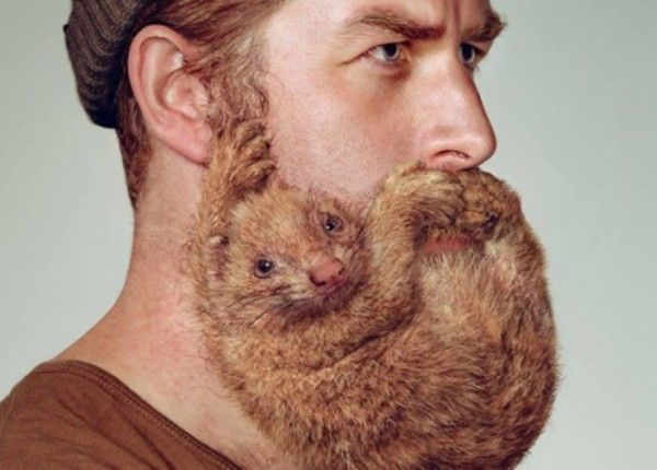 1-Funny-Beard-animal.jpg